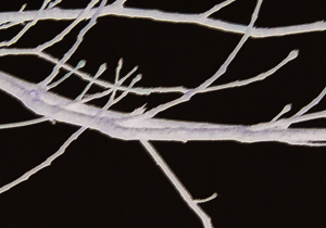 negative style image of a white branch on black background